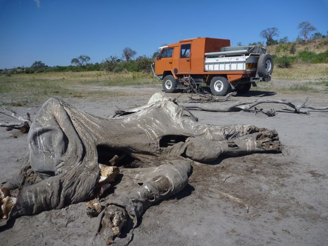 OKAandelephantcarcasChobeBotswana.jpg